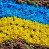 Лучан запрошують взяти участь у святі квітів