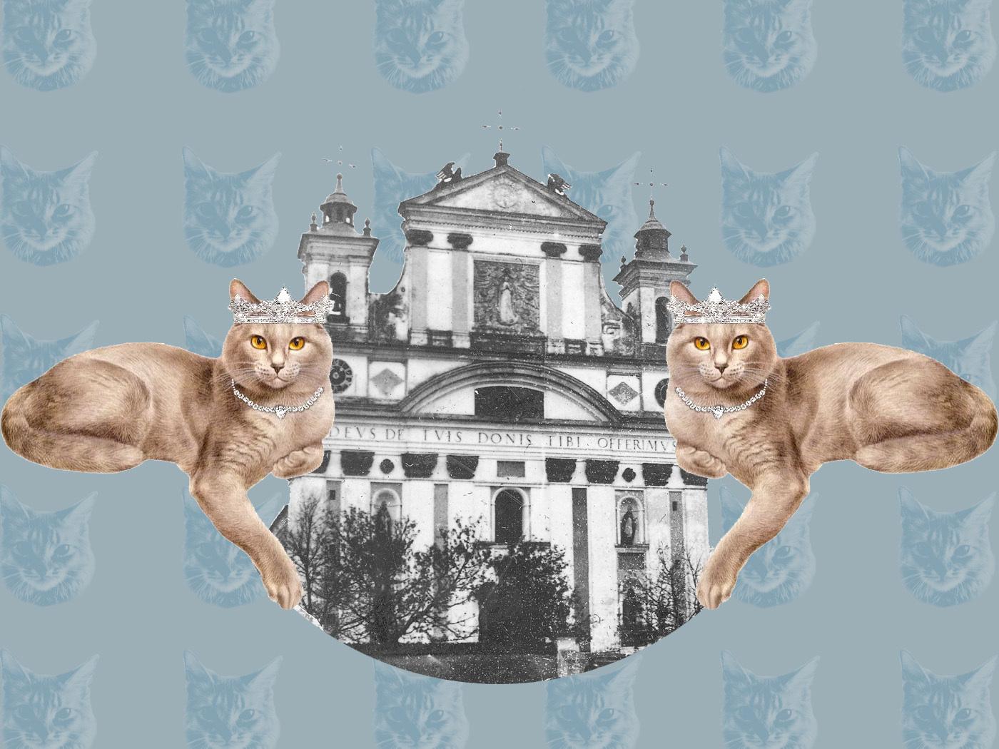 Коти олицької колегіати