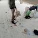 Лучан просять не викидати пакети зі сміттям на узбіччя