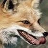 Три випадки сказу тварин у Луцьку: містян закликають провести вакцинацію