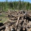 На Волині екологи просять ввести мораторій на санітарну рубку дерев