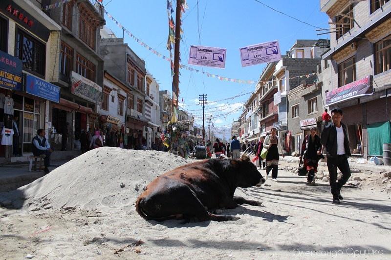 Звичайна картина міста Лех, центру Ладакху, частини штату Джамму і Кашмір, який ще називають «малим Тибетом» через  схожість природи