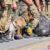 Луцьких прикордонників звинувачують у контрабанді на Донбас
