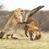 Визначили фіналістів всесвітнього конкурсу фото дикої фауни