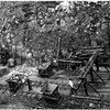 Екскурс в минуле: невпізнавана Волинь 1920-1930-х років. Фото