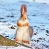 Кумедні світлини з білкою від луцького фотографа