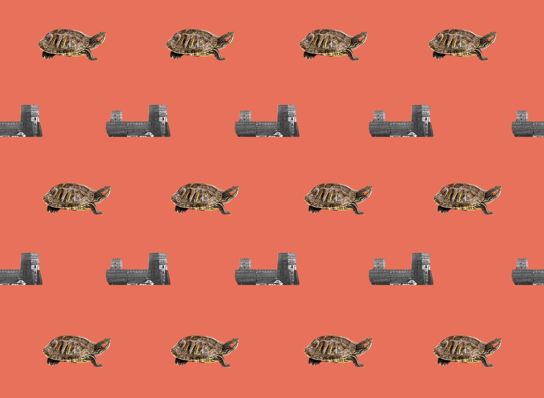 Черепахи старого Луцька у спогадах доньки волинського воєводи