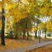 Іваничі у жовтневій позолоті осені. Фоторепортаж