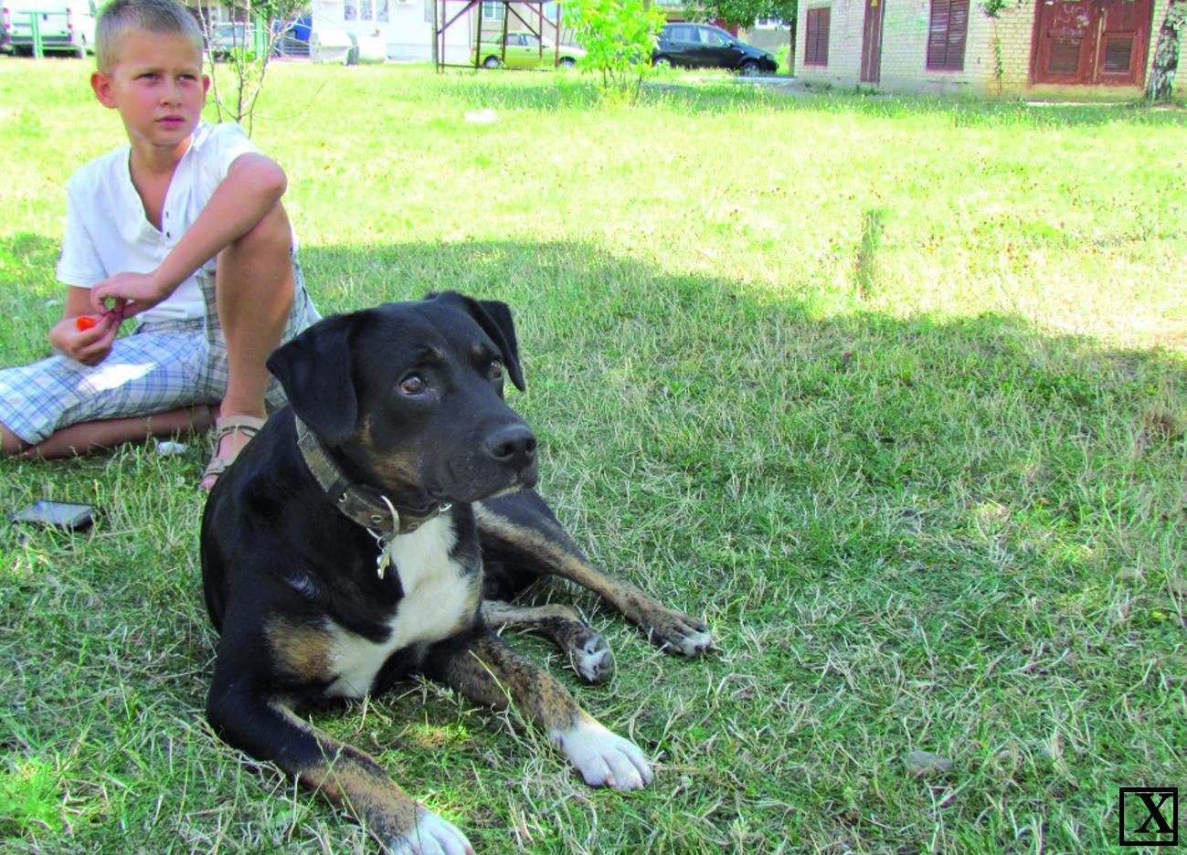 Милий і водночас грізний пес Буч