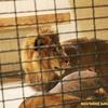 Квитки у Луцький зоопарк - найдешевші в Україні