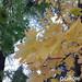 Жовто-багряна краса волинського містечка.Фото