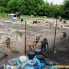 У Луцьку за 11 мільйонів планують збудувати притулок для тварин