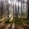 Волинські ліси будуть обстежувати