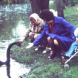 Як виглядав центральний парк Луцька у 1980-х роках. Фото
