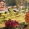Неймовірні фото осінніх квітів у Луцькому зоопарку. ФОТОРЕПОРТАЖ