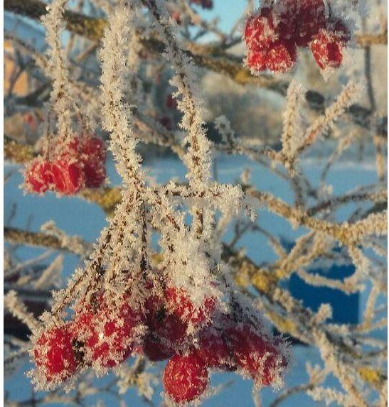 Морозний ранок у селі під Луцьком