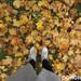 Золота осінь у Шацьку. Фоторепортаж