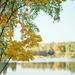 Час роздумів та приємної меланхолії: золота осінь в об'єктиві волинського фотографа
