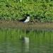 Фотограф у Луцьку «зловив» рідкісну пташку