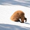 Фіналісти конкурсу «Комедійна фотографія дикої природи». Подивіться їх тут