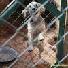 На будівництво луцького притулку для тварин необхідно 13 мільйонів