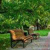 У Луцьку візьмуться за облаштування парків