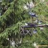Які зміни чекають на Луцький зоопарк