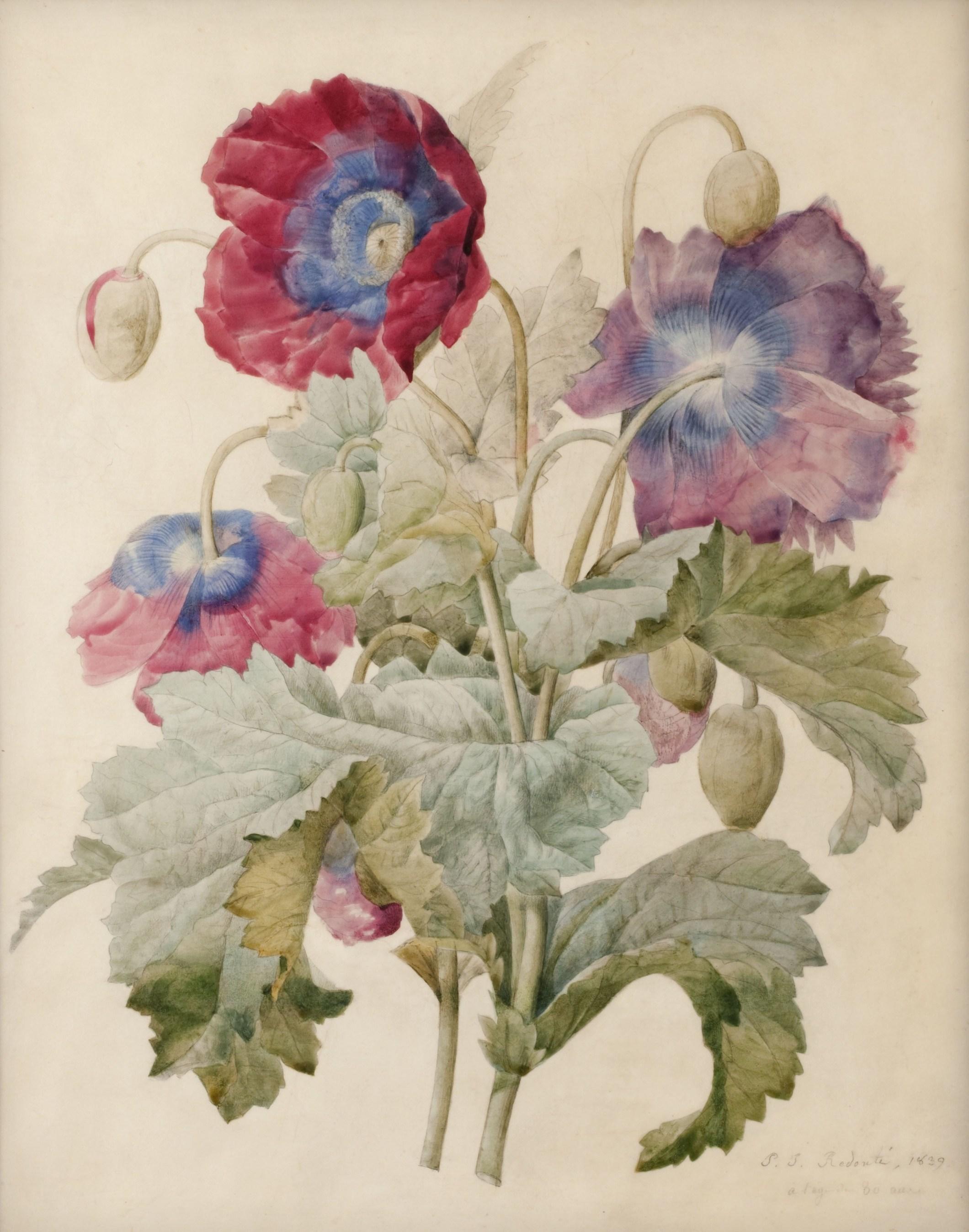 Квіткові акварелі на велені П'єр-Жозефа Редуте