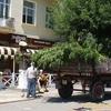 Вздовж вулиці Лесі Українки зріжуть усі дерева